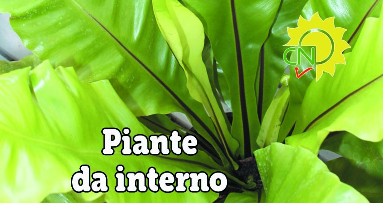 Piante da interno casanatura vivaio for Piante da interno