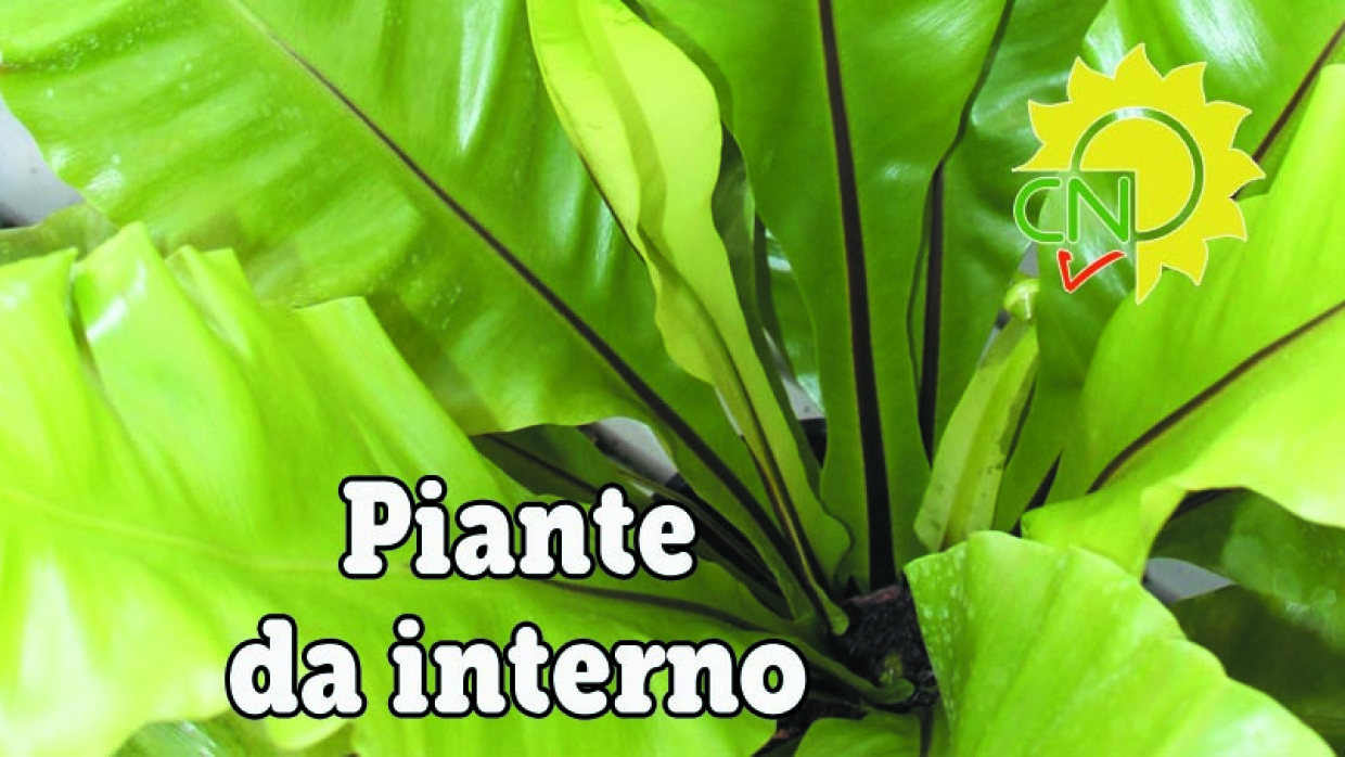Piante Da Interno Piante Appartamento Pictures to pin on ...