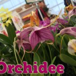 evento_orchidee_2016 (12)