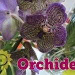evento_orchidee_2016 (13)