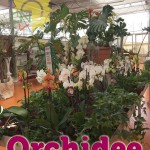 evento_orchidee_2016 (14)