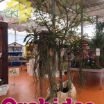 evento_orchidee_2016 (15)