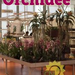 evento_orchidee_2016 (16)