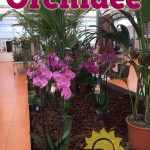 evento_orchidee_2016 (17)