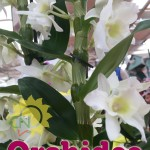 evento_orchidee_2016 (18)