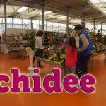 evento_orchidee_2016 (19)