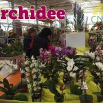 evento_orchidee_2016 (2)