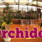 evento_orchidee_2016 (20)