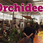 evento_orchidee_2016 (21)