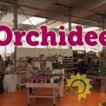 evento_orchidee_2016 (22)