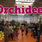 evento_orchidee_2016 (23)