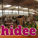 evento_orchidee_2016 (25)