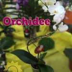 evento_orchidee_2016 (3)