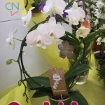 evento_orchidee_2016 (5)