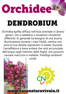 schede_orchidee_dendrobium