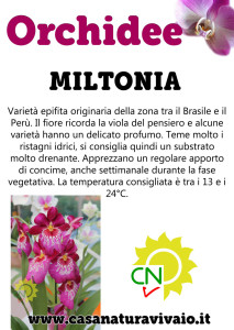 schede_orchidee_miltonia