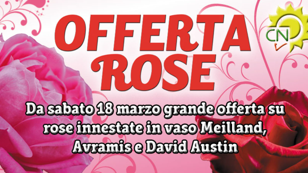 Nov 21, · David Austin Roses Discount Code go to terpiderca.ga Total 22 active terpiderca.ga Promotion Codes & Deals are listed and the latest one is updated on November 21, ; 3 coupons and 19 deals which offer up to 33% Off and extra discount, make sure to use one of them when you're shopping for terpiderca.ga; Dealscove.
